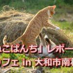 ネコカフェで癒される! 大和市南林間の「ねこぱんち」 レポート