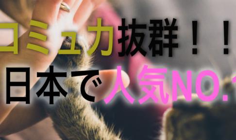 日本で人気No. 1のアメリカンショートヘア