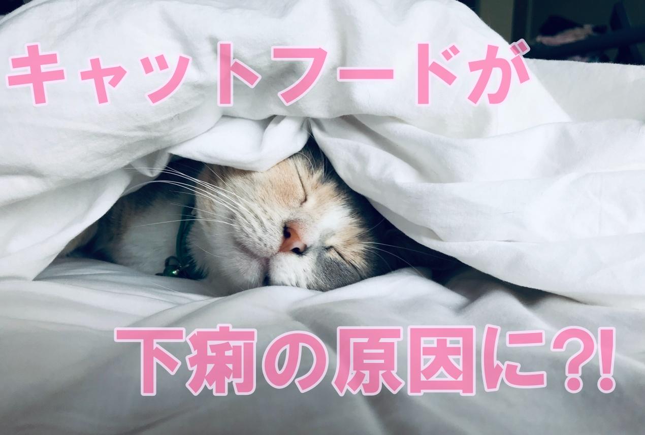 うんち ゆるい 子猫