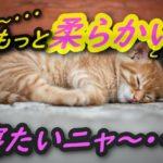 猫用のハンモックは100均材料で簡単に作れます【動画解説付き】